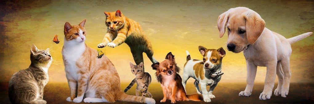 Acerca de ciertas metáforas, de nuevo sobre los derechos de los animales